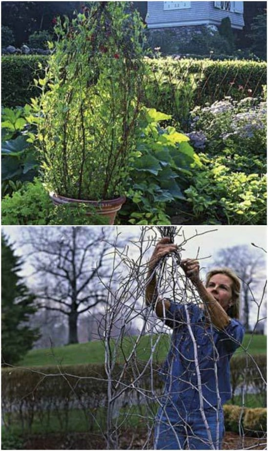 Cheap And Easy DIY Potted Branch Trellis