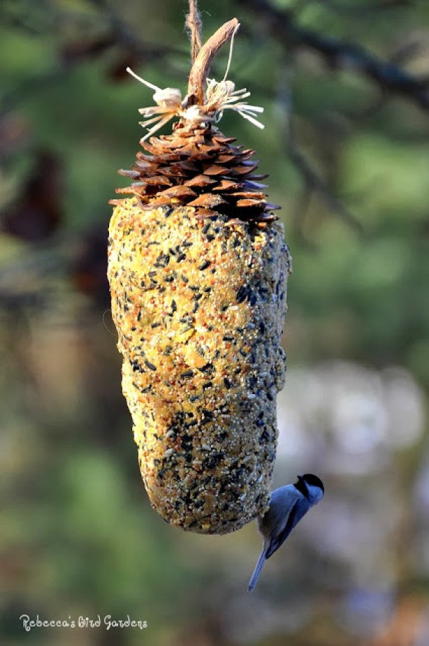 Summer DIY Projects: 15 Easy Homemade Bird Feeders