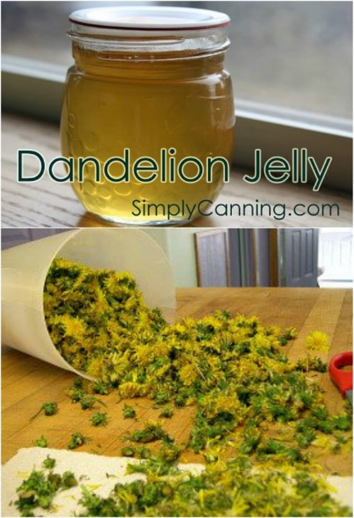 Old Fashioned Dandelion Jelly
