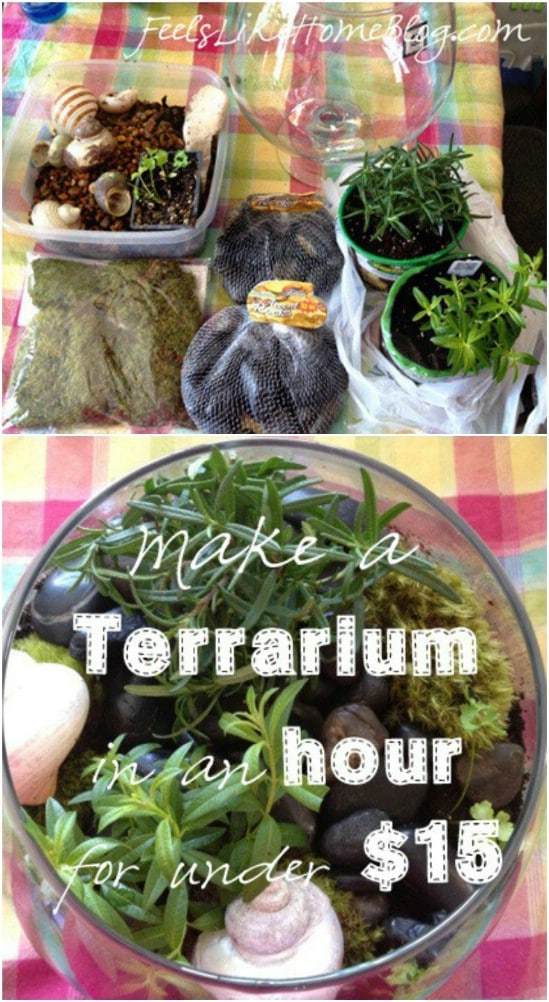 Kid Friendly DIY Terrarium