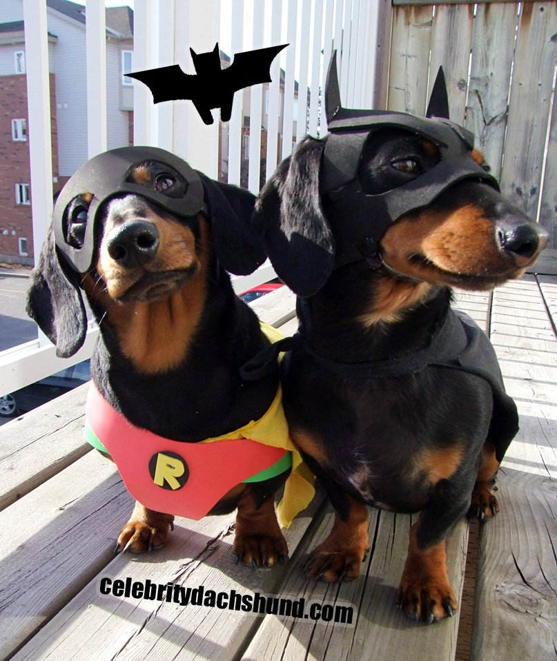 Batdog and Robin | 25+ Creative Costumes for Dogs