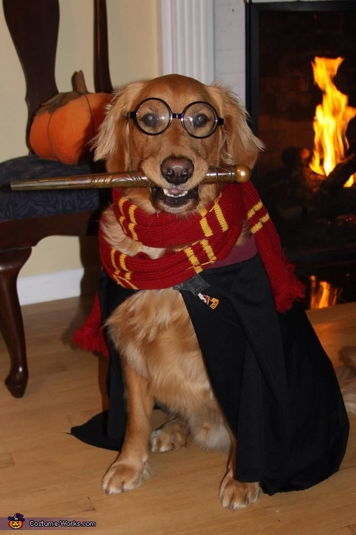 Harry Potter Dog Costume | 25+ Creative Costumes for Dogs