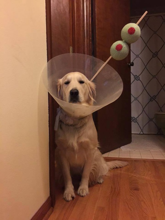 Martini Dog | 25+ Creative Costumes for Dogs