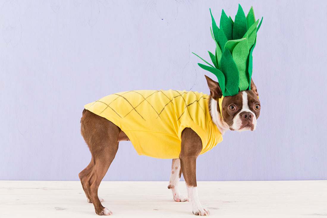 Pineapple dog | 25+ Creative Costumes for Dogs