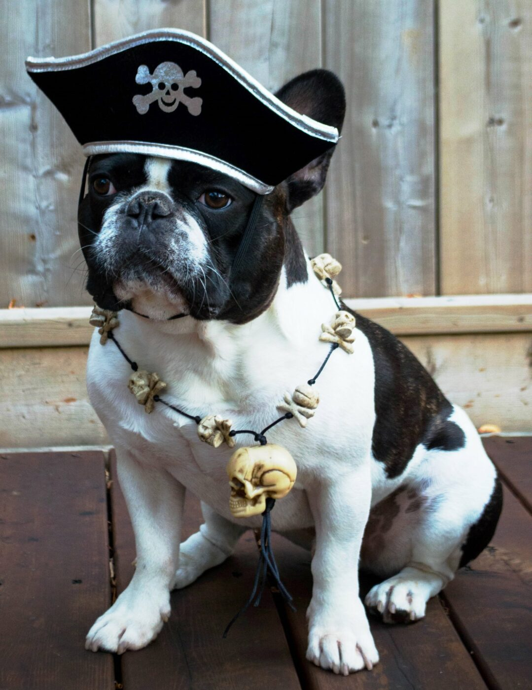 Pirate Dog | 25+ Creative Costumes for Dogs