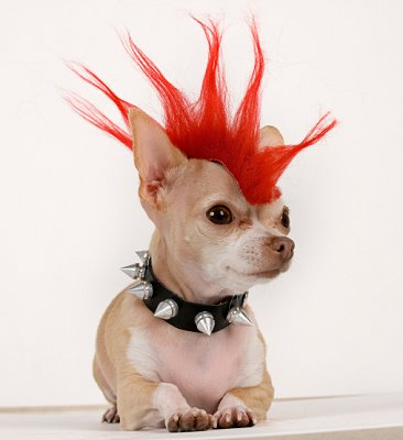 Punk Dog | 25+ Creative Costumes for Dogs