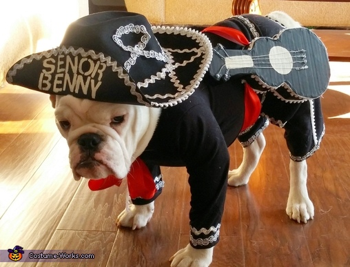 Senor Benny the Mariachi Dog | 25+ Creative Costumes for Dogs