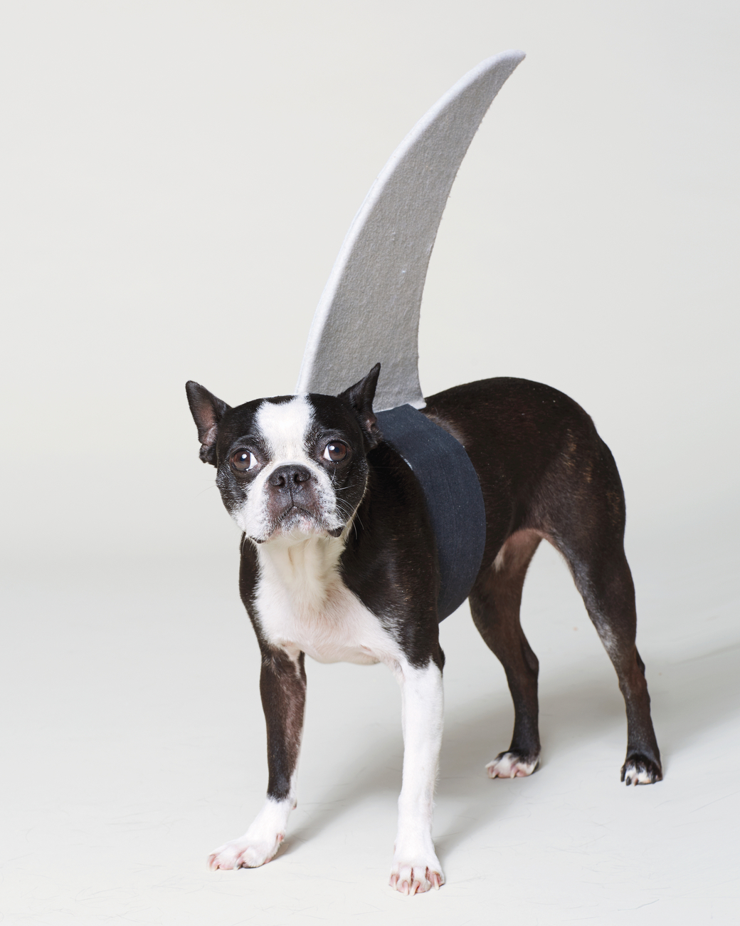 Shark Costume | 25+ Creative Costumes for Dogs
