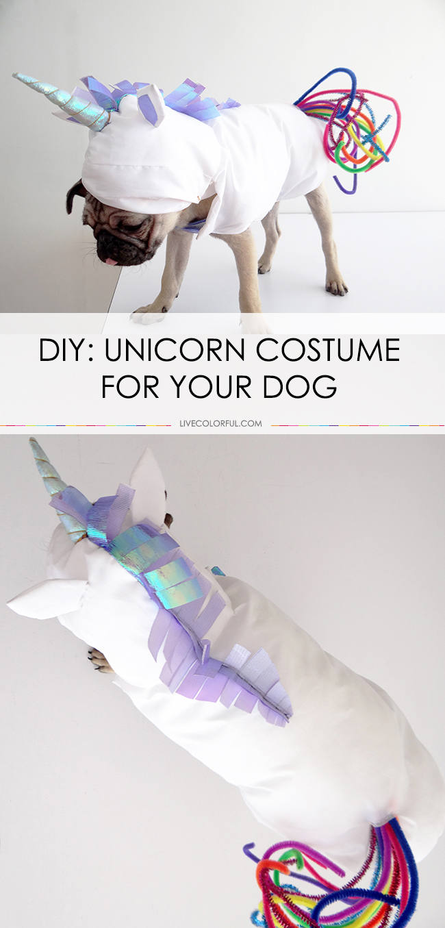 Unicorn Costume for your Dog | 25+ Creative Costumes for Dogs