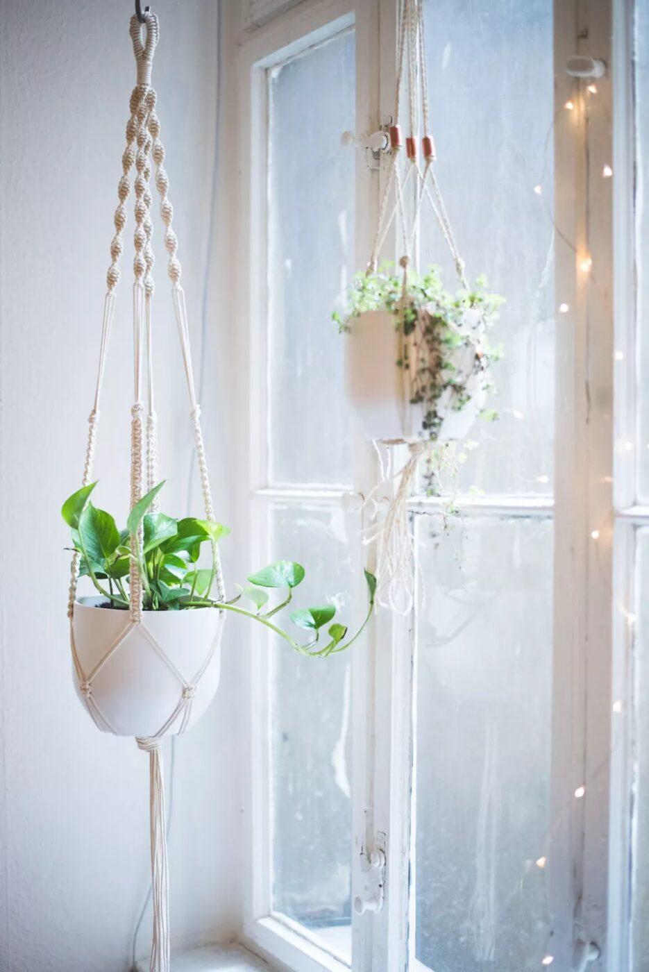 Macrame plant holders in front of a window