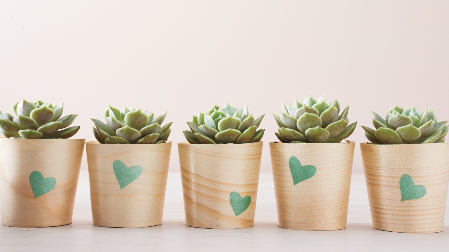 13 Lovely DIY Valentine's Day Succulents