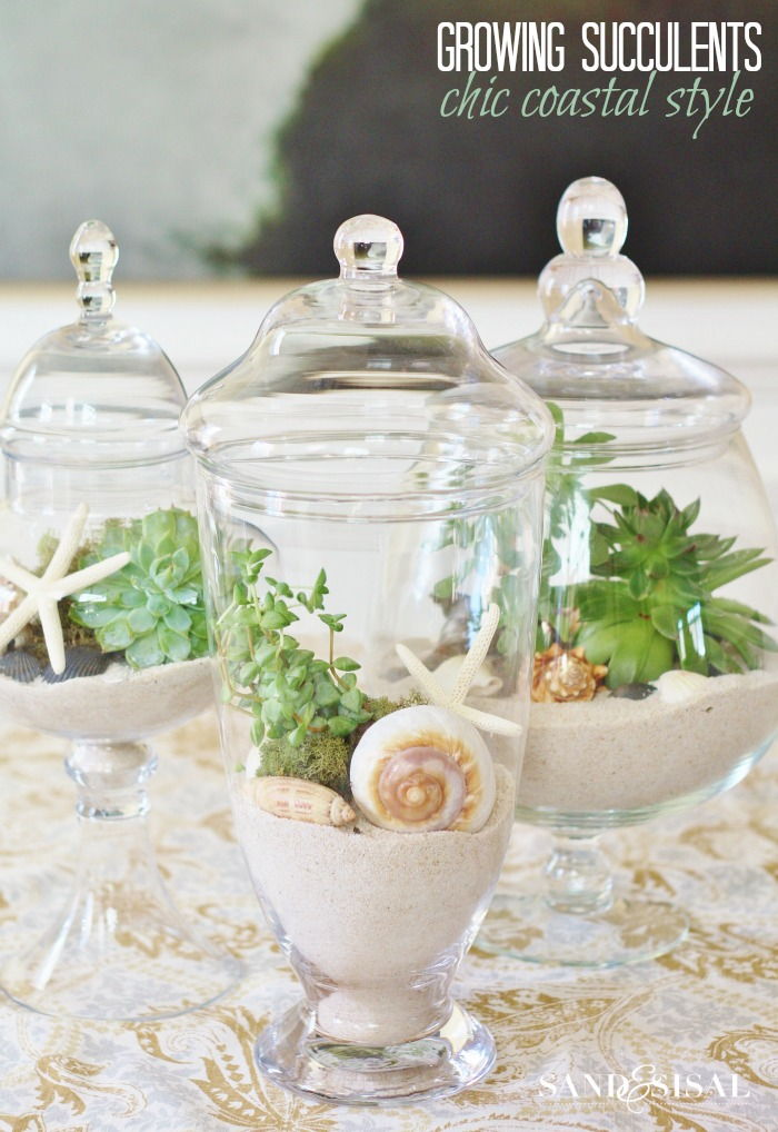 Growing Succulent Terrariums in Glass Apothecary Jars