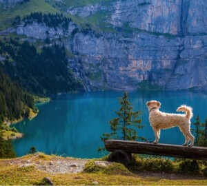 The Top Tips for Hiking With Your Dog - trained, parasite, Hiking, hike, dog