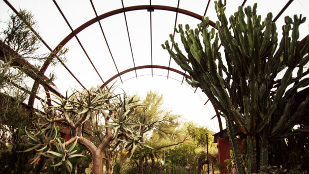 4 Popular Spring Activities to Try in Phoenix - trip, travel, spring, south mountain park, ponderosa stables, phoenix, nature, mountain, hike, desert botanical garden, camelback, activitues