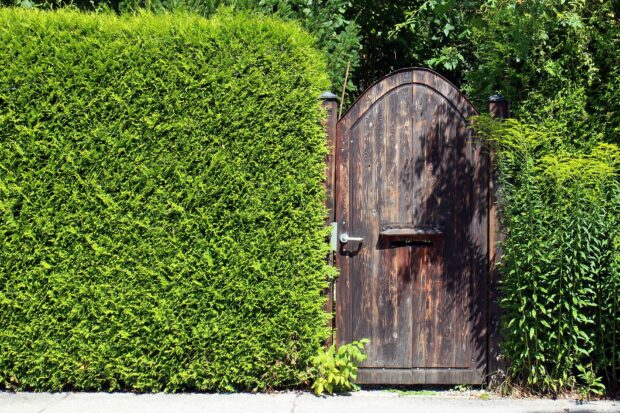 Garden and Backyard Fencing Opportunities For Your Home - outdoors, garden, fence