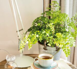 Ideas to Reuse Coffee - how to reuse coffee, DIY & craft, clean home, beauty
