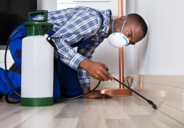 How to Prepare for a Pest Treatment for Your Orange County Home - pest, home, control, clean