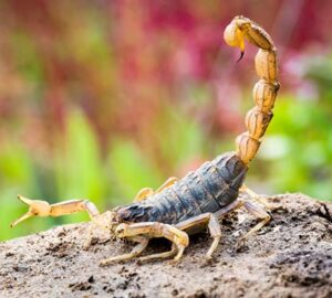 How To Prevent Scorpions From Invading Your Property - yard, scorpion, prevention, home