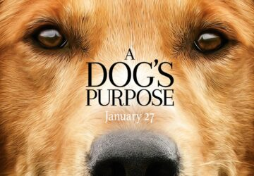 Dog Movies You Should See - style motivation, pets, movies, dogs, dog movies