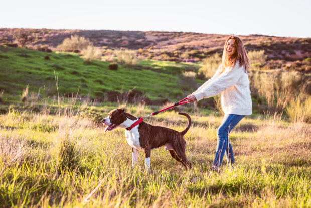 5 Main Differences Between A Harness And A Collar For Your Dog