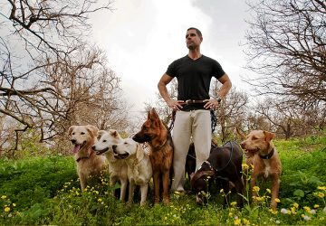 Being a Dog Trainer - Why It Is One of the Best Jobs in the World - world, specialize, self fulfillment, dog trainer, best job