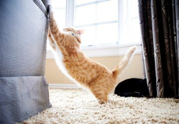 How to Stop Your Cats from Scratching Furniture - training, furniture, cats