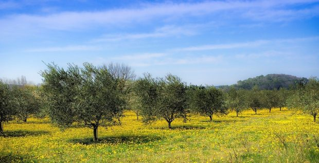 Texas Olive Oil-Themed Day Trips at Texas Hill Country Olive Co. - travel, texas, olive, oil