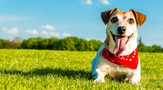 4 Tips to Keep Your Dog Happy This Summer - sunscream, summer, happy, Frozen Treats, exercise, dog
