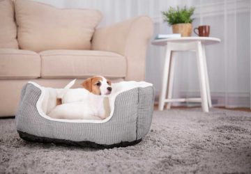 The Main Essential Tips For Raising A Dog In An Apartment - tips, style motivation, essential tips for raising dog in an apartment, dogs, dog in an apartments, dog advice, animals, animal care