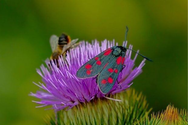 Do You Have A Spotted Lanternfly Problem? Here Are A Few Solutions - problem, lanternfly, host plant