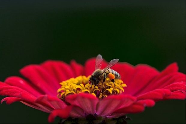 How To Teach Children The Importance Of Bees - society, Lifestyle, importance, honeybee, bee