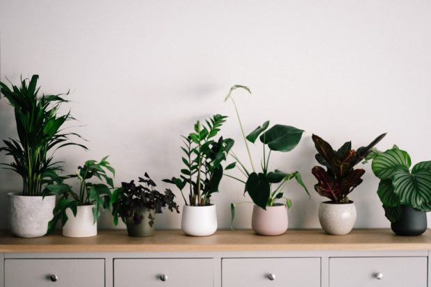 6 Low-Maintenance Indoor Houseplants That Look Awesome - Plants, interior design, home, decor